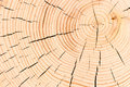 Tree with cracks background macro shot cut down a Stock Photography