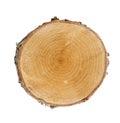 Tree cut Royalty Free Stock Photo