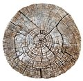 Cut wood trunk or tree stump Royalty Free Stock Photo