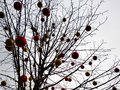 A tree decorated with colored Christmas balls against a grey sky. Moscow. Russia. December 6, 2019 Royalty Free Stock Photo