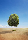 A Tree on A Dry Land Royalty Free Stock Photo