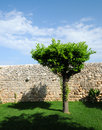 Tree and dry stone wall Royalty Free Stock Photo