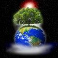 Image : Tree on earth  of