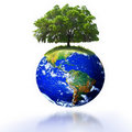 Tree on earth Royalty Free Stock Photo