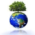 Árbol en país