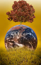 Picture : Tree on earth with image