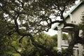 tree för live oak för hus Fotografering för Bildbyråer