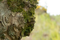 Tree face bark giving uncanny appearance of Stock Image