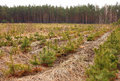 Tree farm nursery plantation young forest grow Royalty Free Stock Images