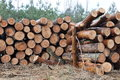 Tree felled in the forest product for timber industry Stock Photos