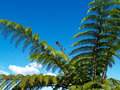 Tree fern, against blue sky. Stock Images