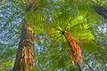 Tree Fern in jungle surroundings Stock Photo