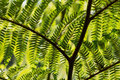 Tree fern at a rain forest reunion island Stock Image