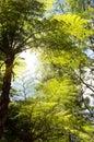 Tree ferns Royalty Free Stock Photo