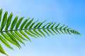 Tree ferns leaf in blue sky a Stock Photos