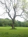Tree in field big majestic green Stock Image