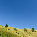 Tree in the field with blue sky Stock Image