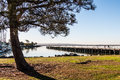 Tree and Fishing Pier at Chula Vista Bayfront Park Royalty Free Stock Photo