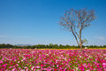 Tree in flowers field, sunny day Royalty Free Stock Photos