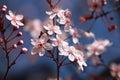 Tree Flowers In Spring