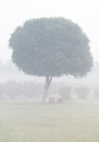 Tree in the fog Stock Images