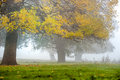 Tree in the fog autumn Stock Photo