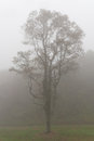 The tree in the fog blue ridge parkway Royalty Free Stock Image