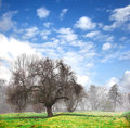 Tree in the fog early spring blue sky Royalty Free Stock Photography