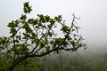 The tree in the fog in mountains Royalty Free Stock Photo