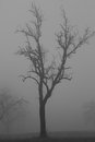 A tree into the fog winter rural landscape Royalty Free Stock Photo