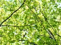 Tree foliage fresh spring colors Royalty Free Stock Photo