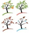 Tree four seasons Royalty Free Stock Photo