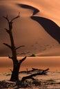 Tree för dynnamibia sossusvlei Arkivbilder