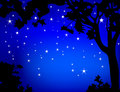 Tree framed Night Stars Royalty Free Stock Images