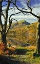 Tree framed view, Snowdonia national park