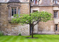 A tree in front of an old house in oxford uk Royalty Free Stock Images