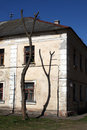 Tree in front of old house urban background Royalty Free Stock Images