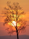 Tree in front of setting sun a the Royalty Free Stock Photo
