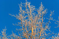 Tree with frost a that is covered in Royalty Free Stock Photo