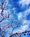 A tree full of blue eyes evil eyes a meaning of fortune in turkey eye is symbol good luck there is for avoiding bad luck turkey Royalty Free Stock Photos