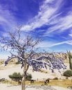 A tree full of blue eyes evil eyes standing in the field turkey eye is symbol good luck there is for avoiding bad luck goreme Stock Photos