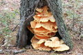 Tree fungi photo taken at mill pond burlington ma Stock Photography