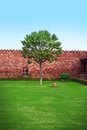 Tree in garden lone stands a quiet courtyard on a green lawn Stock Photo