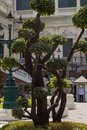 stock image of  Tree at The Grand Palace, Bangkok, Thailand