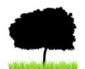 Tree and grass silhouette green isolated on a white background eps vector Royalty Free Stock Images