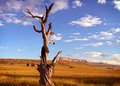 Tree in grassland a trunk african Royalty Free Stock Photo