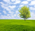 Tree on green field Stock Image