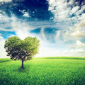 Tree green field with heart shape under blue sky beauty nature valentine concept background Royalty Free Stock Photos