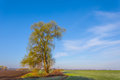 tree among a green fields Royalty Free Stock Photo