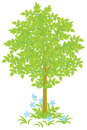 Tree green and grass with blue flowers vector illustration on a white background Stock Images
